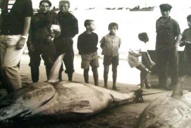 atum-almadrava