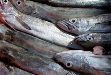 pescada-de-sesimbra