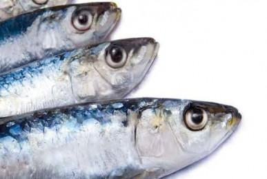 sardinha-antes-grelha