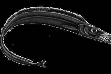 espada-preto-web