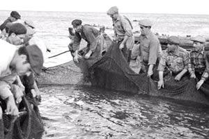historia-do-nosso-peixe