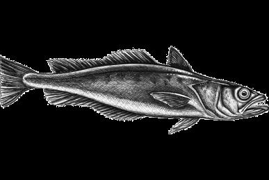 pescada-web