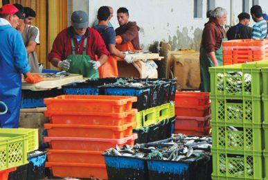 interdicao-pesca-sardinha-s